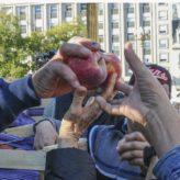 Pera o Manzana