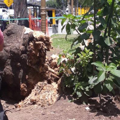 No es el árbol, es la corrupción